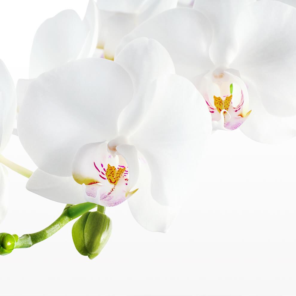 文蘭慈善協會網站